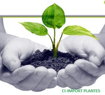 011_ci_import_plantes